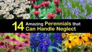 Low Maintenance Perennials titleimg1
