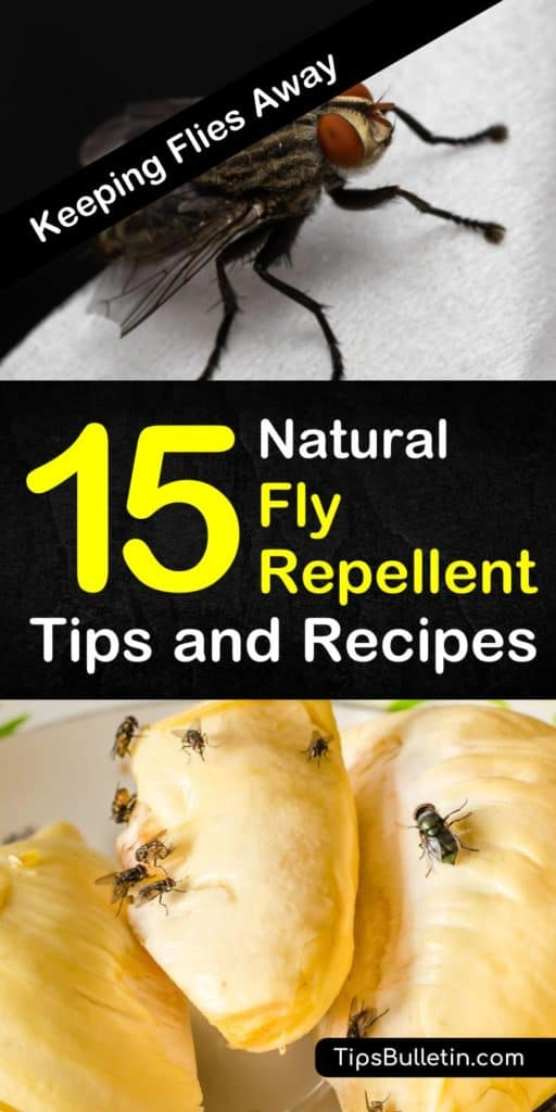 Learn about 15 ways to make natural fly repellent for your home, both indoors and outdoors! Use essential oils and plants, or make an easy homemade pest control spray and you won't have to worry about flies in your home this summer! #diypestcontrol #flyrepellent #flyspray