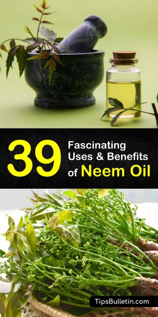 39 amazing uses and benefits of neem oil. With detailed neem oil uses for health, skin, acne, face, hear, beauty, plants and garden. Especially using it as natural pest control remedy to protect insects. The article includes also DIY homemade neem oil recipes for dogs.#neemoil #haircare #plants
