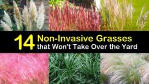 Non Invasive Grasses titleimg1