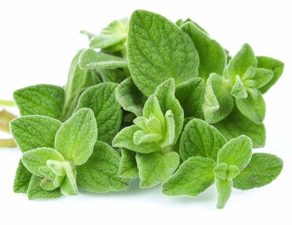 Oregano oil can help get rid of skin tags.
