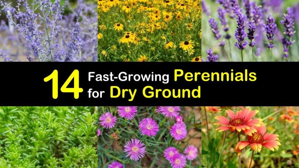 Perennials for Dry Ground titleimg1