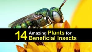 Plants for Beneficial Insects titleimg1