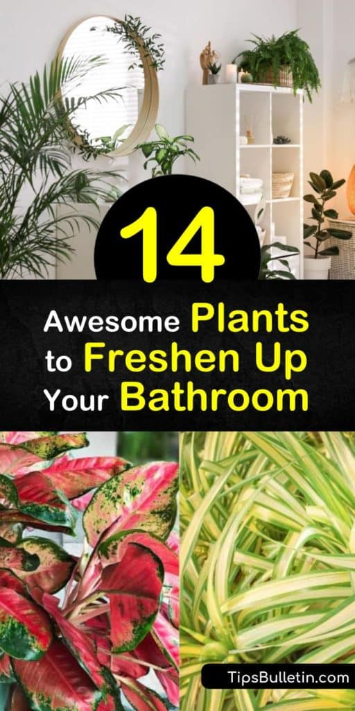 Learn how to create a clean and green space in your bathroom with indoor plants. Grow tropical plants such as peace lily on an indirect light windowsill or hang a spider plant in the bright light of a sunny window. #bathroomplants #plants #bathroom