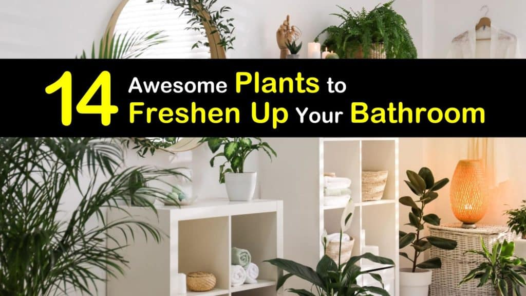 Plants for Your Bathroom titleimg1