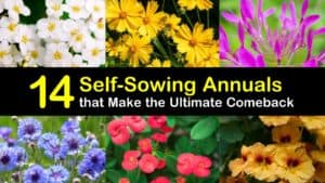 Self Sowing Annuals titleimg1