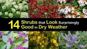 Shrubs for Dry Sites titleimg1