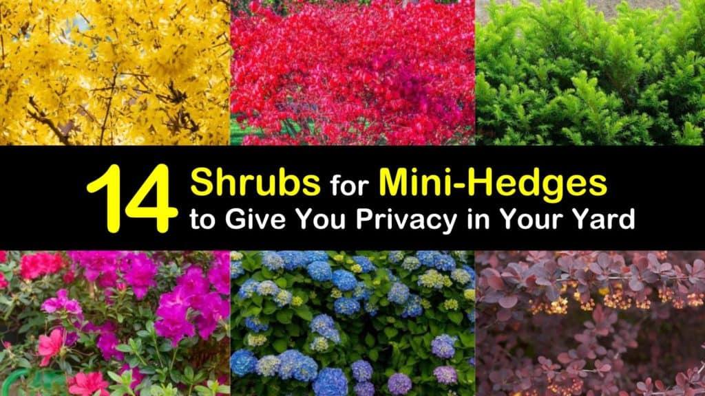 Shrubs for Small Hedges titleimg1