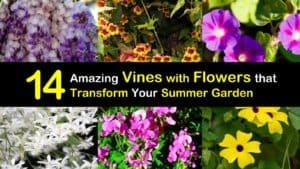 Summer Blooming Vines titleimg1