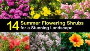 Summer Flowering Shrubs titleimg1