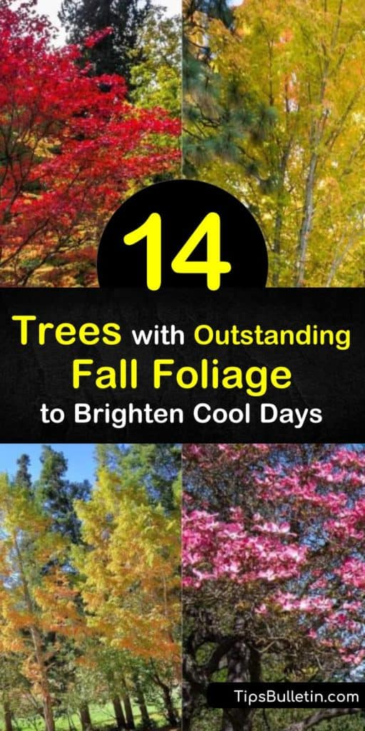 Sweet Gum, Dogwood, Red Maple, and Sugar Maple trees work well to brighten up your landscape and make an excellent shade tree. The green leaves give way to brilliant hues of red, orange, purple, and yellow during the crisp days of fall. #fall #foliage #trees #fall #color #treesforfallfoliage