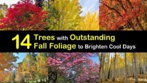 Trees for Fall Foliage titleimg1