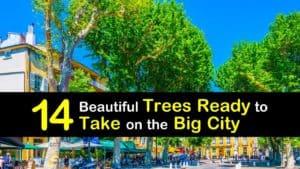 Trees for Tough Urban Sites titleimg1
