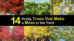Trees that Make a Mess titleimg1