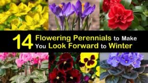 Winter Blooming Perennials titleimg1