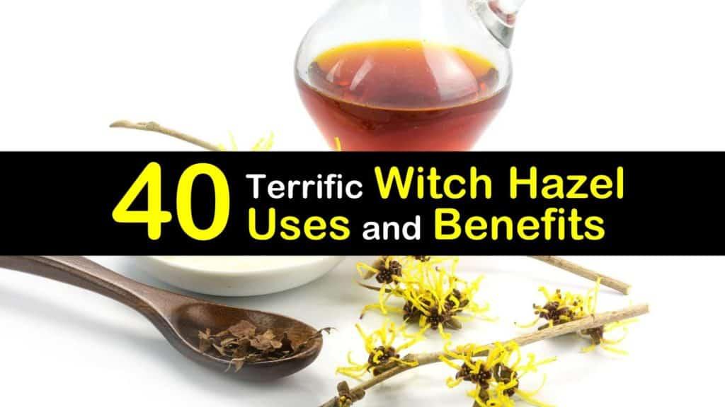 witch hazel uses titleimg1