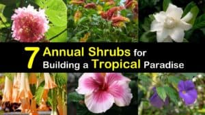 Annual Tropical Shrubs titleimg1