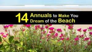 Annuals for the Beach titleimg1