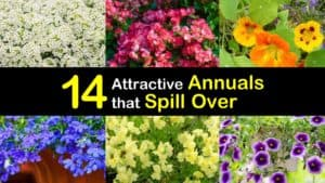 Annuals that Spill Over titleimg1