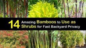 Bamboo as Shrubs titleimg1
