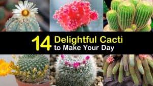 Beautiful Cacti titleimg1