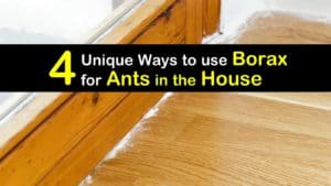 Borax for Ants in the House titleimg1