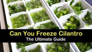 Can You Freeze Cilantro