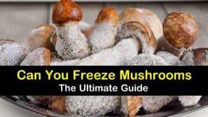 Can You Freeze Mushrooms titleimg1