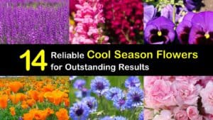 Cool Season Flowers titleimg1