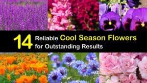 Cool Season Flowers titleimg1