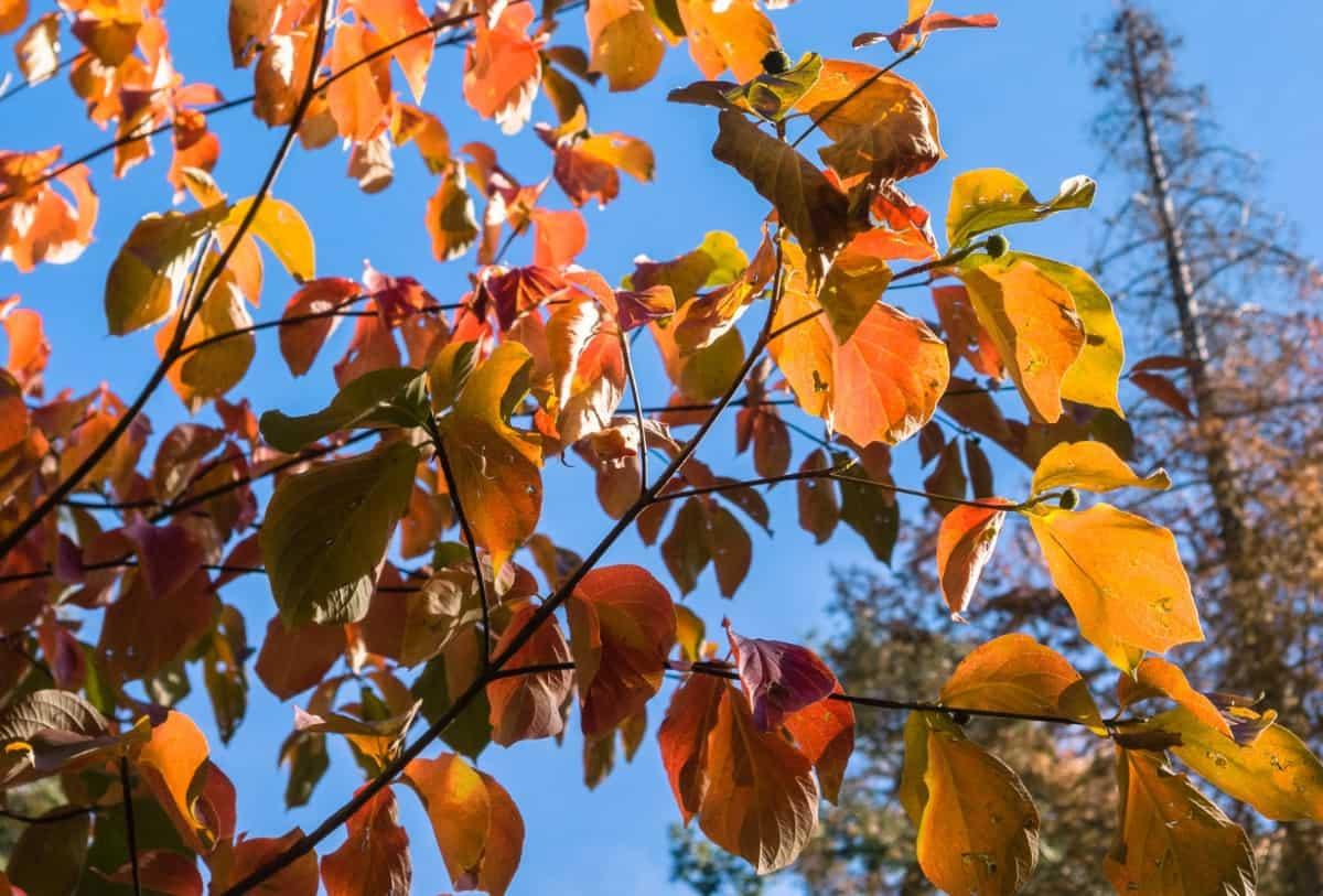 Dogwood trees have spectacular four-season interest.