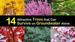 Drought Tolerant Trees titleimg1