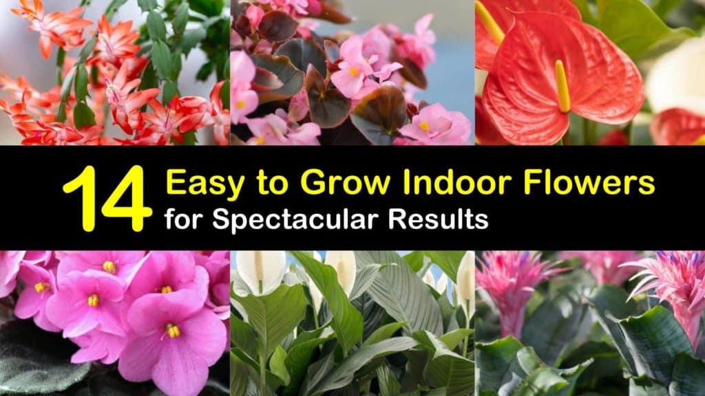 Easy to Grow Indoor Flowers titleimg1