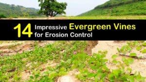 Evergreen Vines titleimg1
