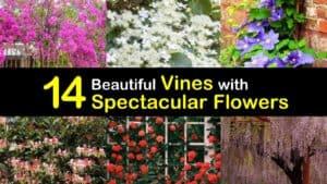 Flowering Vines titleimg1