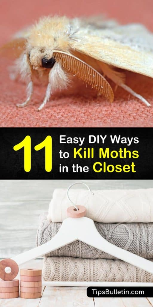Take control of a webbing moth infestation with these easy steps for the ultimate pest control. Kill adult moths, moth eggs, and moth larvae with these homemade repellents and preventative measures. #rid #closet #moths