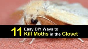 How to Get Rid of Moths in the Closet titleimg1