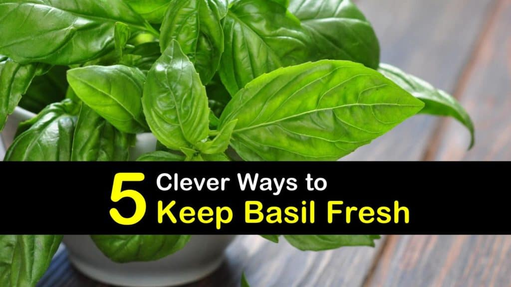 How to Keep Basil Fresh titleimg1
