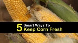 How to Keep Corn Fresh titleimg1