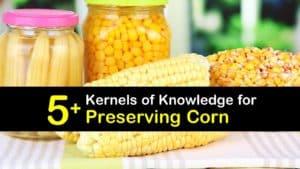 How to Preserve Corn titleimg1