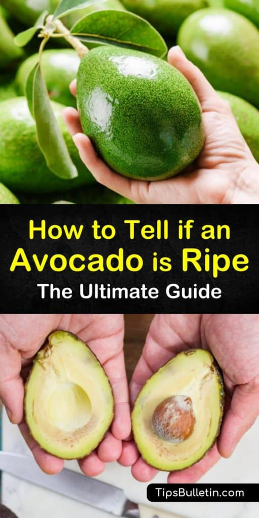 Learn how to choose a ripe avocado by placing it in the palm of your hand and applying gentle pressure. Speed up the ripening process by storing an unripe avocado in a paper bag with a banana or apple. #avocado #ripe #ripeavocado