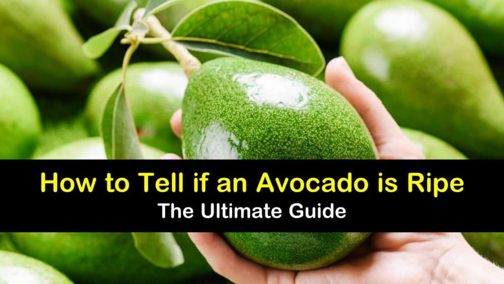 How to Tell if an Avocado is Ripe titleimg1