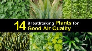 Indoor Plants for Air Quality titleimg1
