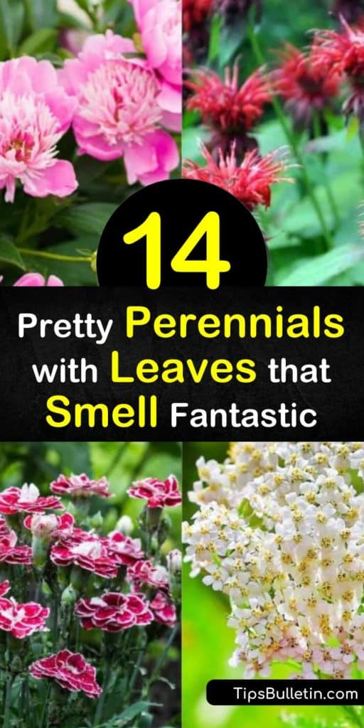Get in touch with your five scenes with these fragrant flowers that last until late summer. Just like the hummingbirds, you won't be able to get enough of the sweet scents from phlox, dianthus, lilac, and peonies that can also be brought inside as a cut flower. #perennials #leaves #smell