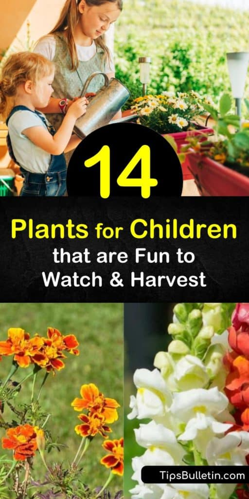 Help your child grow indoor and outdoor plants and watch their confidence grow with their new plants. Grow radishes and carrots for kids to harvest, marigolds and nasturtiums to attract pollinators, and lamb's ear for a sensory garden. #plantsforchildren #gardening #children