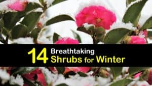Shrubs for Winter titleimg1