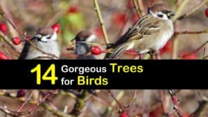 Trees Birds Love titleimg1