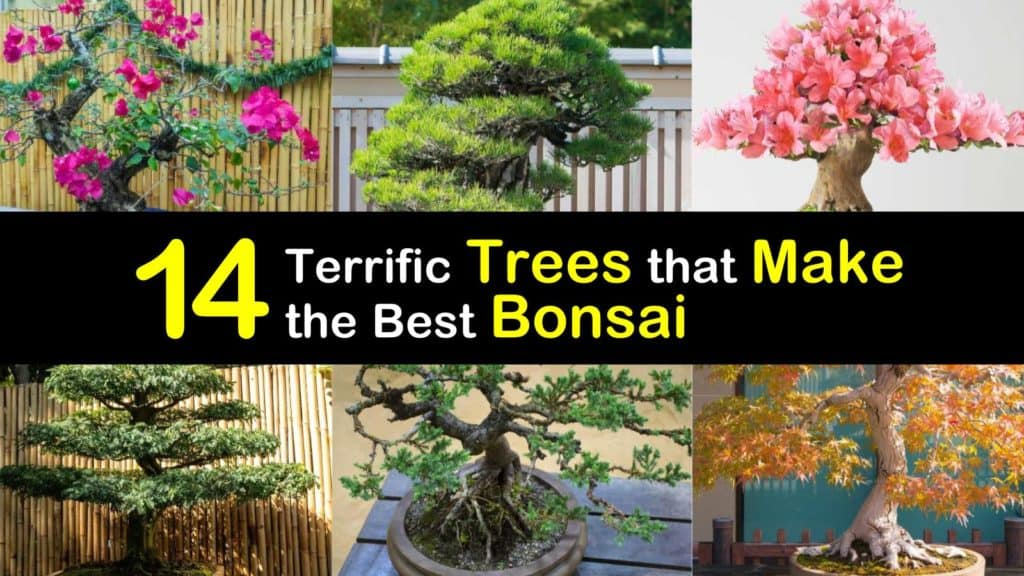 Trees for Bonsai titleimg1
