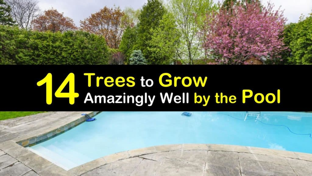 Trees to Grow by the Pool titleimg1
