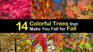 Trees with Unusual Fall Colors titleimg1